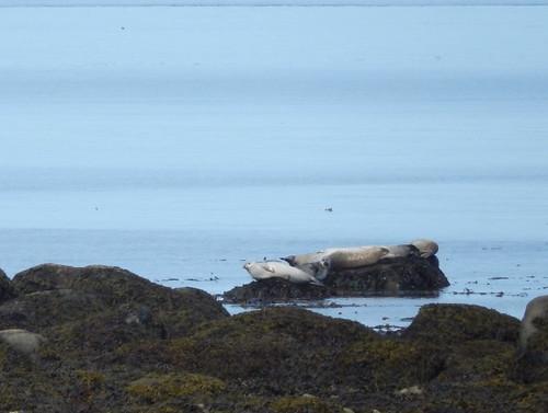 Parc du Bic - zeehonden