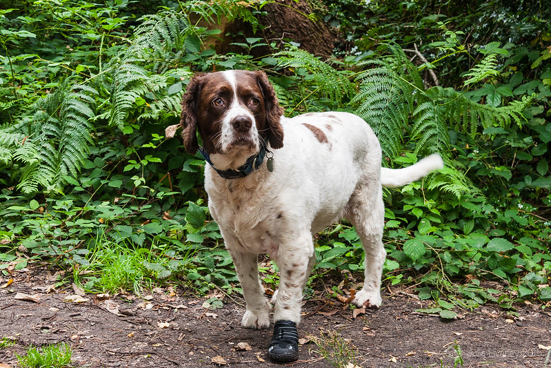 Best foot forward, Max