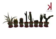 Multistripe Cactus