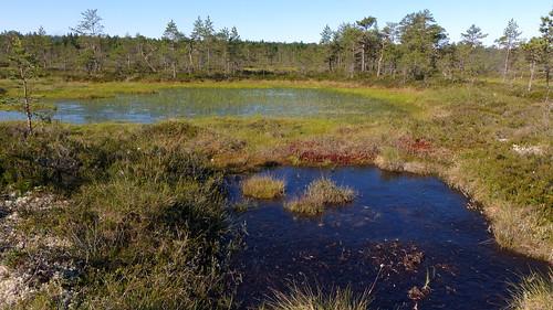 summer finland geotagged july fin bog 2015 kankaanpää satakunta 201507 korvaluoma 20150701 järvikeidas geo:lat=6194798558 geo:lon=2249678453