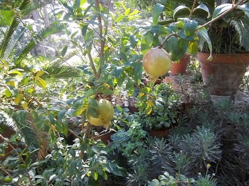 Garden, San Bonaventura al Palatino