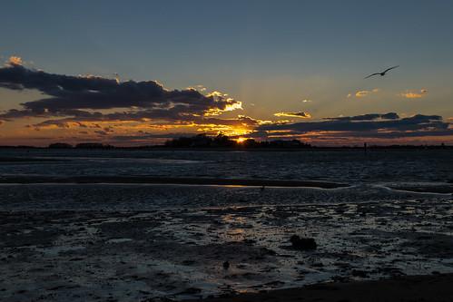 ocean sunset sky reflection bird beach clouds reflections evening sand nikon connecticut seagull atlanticocean hdr clintontownbeach nikond5300