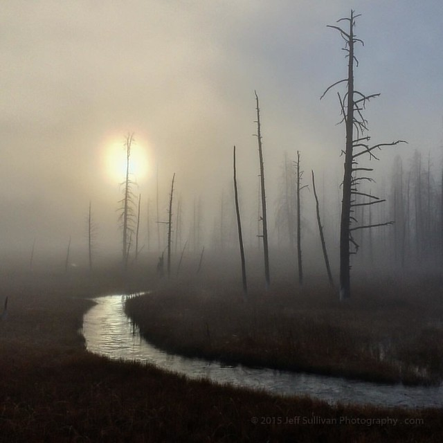 Sun and Trees in Yellowstone Fog