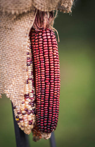 Wild Maize (Weekly Living through the Lens Challenge: Holiday Foods) by Geoff Livingston