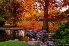 Les couleurs de la nature !