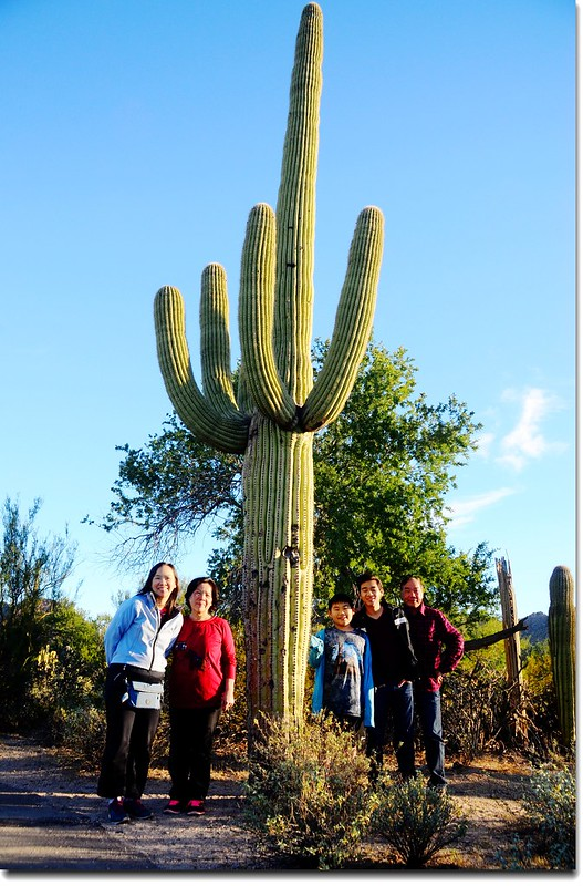 Saguaros growing along the Desert Discovery Nature Trail 2