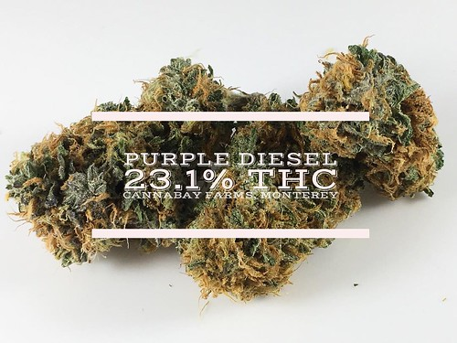 While most of the effects are similar to traditional sativas (energizing, uplifting, focused), Purple D is also an exceptional strain for pain relief. A sneaky cross between Pre-98 Bubba Kush and Sour Diesel, this strain takes a while to fully kick in. Ho