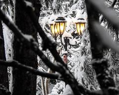 Snowlamps - Snowpocalypse 2017_15