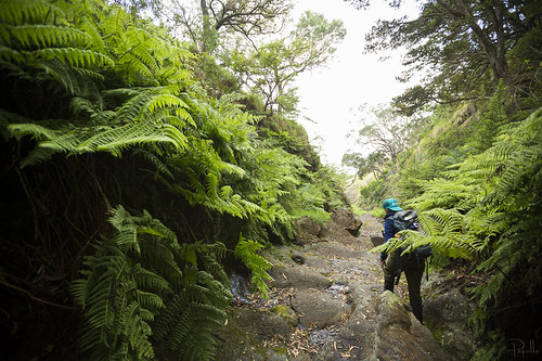 KUPU AmeriCorps intern Ariana Loehr walking through a gulch laden with native Pohole Ferns.