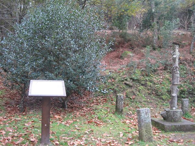 Arbusto en la Senda Botánica del Castillo de Sobroso