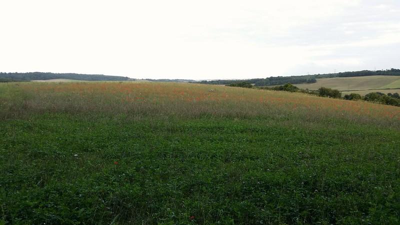 Poppy field #sh