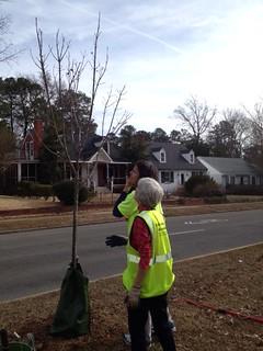 pruning westover hills 1