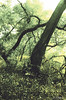 RCCE - Trees - LR Adjustments