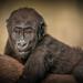 Cincinnati Zoo 8-20-15-8022 by joemastrullo