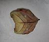 No es una hoja, es una polilla / It is not a leaf, it is a moth by jjrestrepoa (busy)