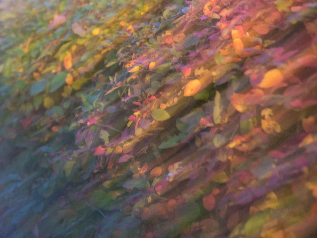 autumn-1300977