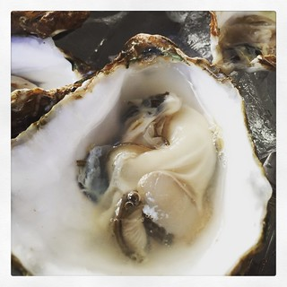 00oysters
