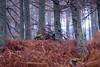 Bracken and Trees, Forest above Yair Bridge, Scottish Borders by iainmac2