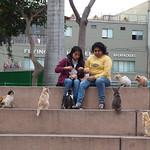 Di, 29.09.15 - 17:21 - Parque Kennedy, Miraflores