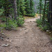 The Trail Leads On