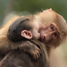 Jonge bavianen by K.Verhulst