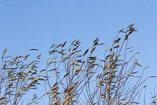 Autumn skies