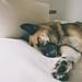 Sleep Well by DOKTOR WAUMIAU