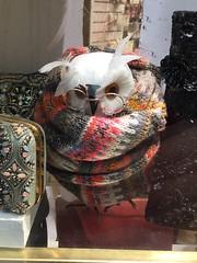 Shop window owl