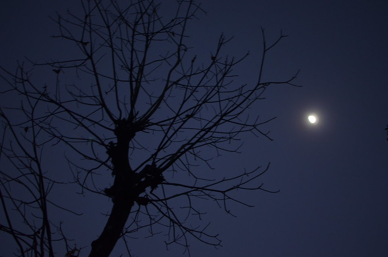 Only the moon was a witness of this journey to Srikhola