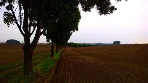 unknown treesure it is than