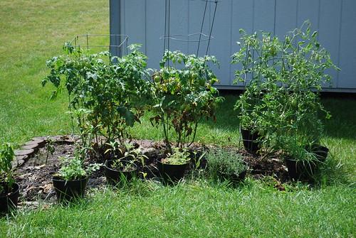 July: Burpee Summer Herb & Veggie Garden Update!