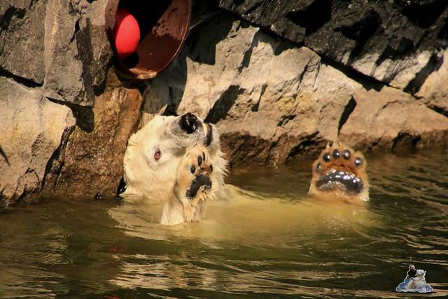 Tierpark Berlin 23.08.2015  0146