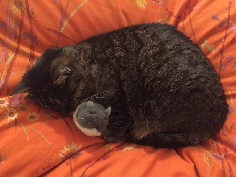 Tabby and a mouse