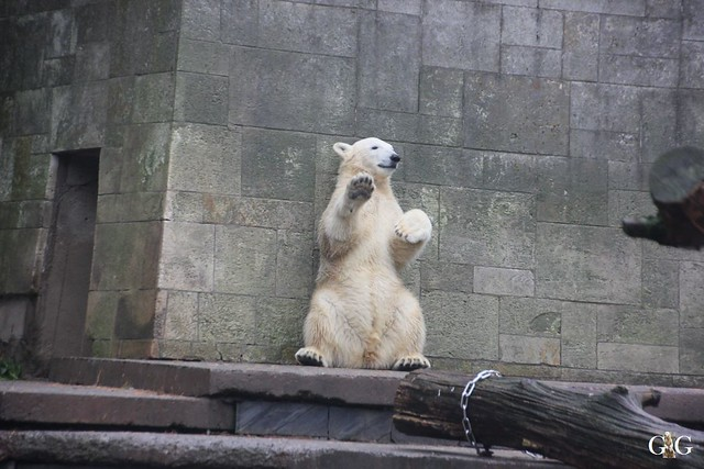 Besuch Zoo Rostock 17.10.201584