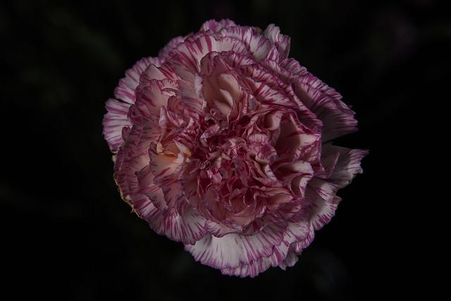 Raver Ria_Flower Test Shoot