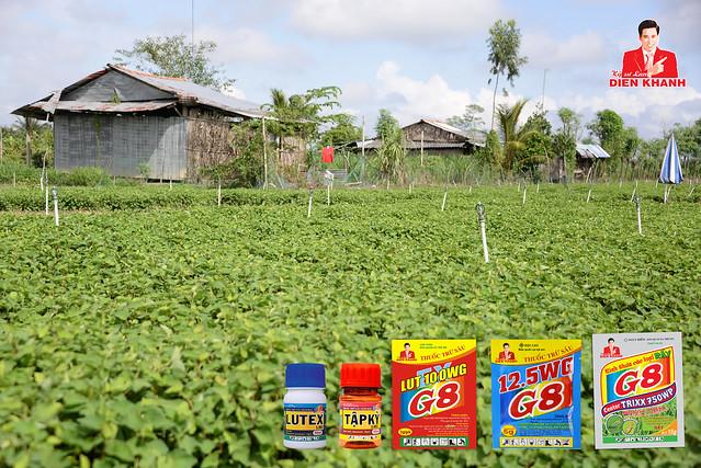 """Mô hình sản xuất """"Rau an toàn"""" ở Tây Ninh"""