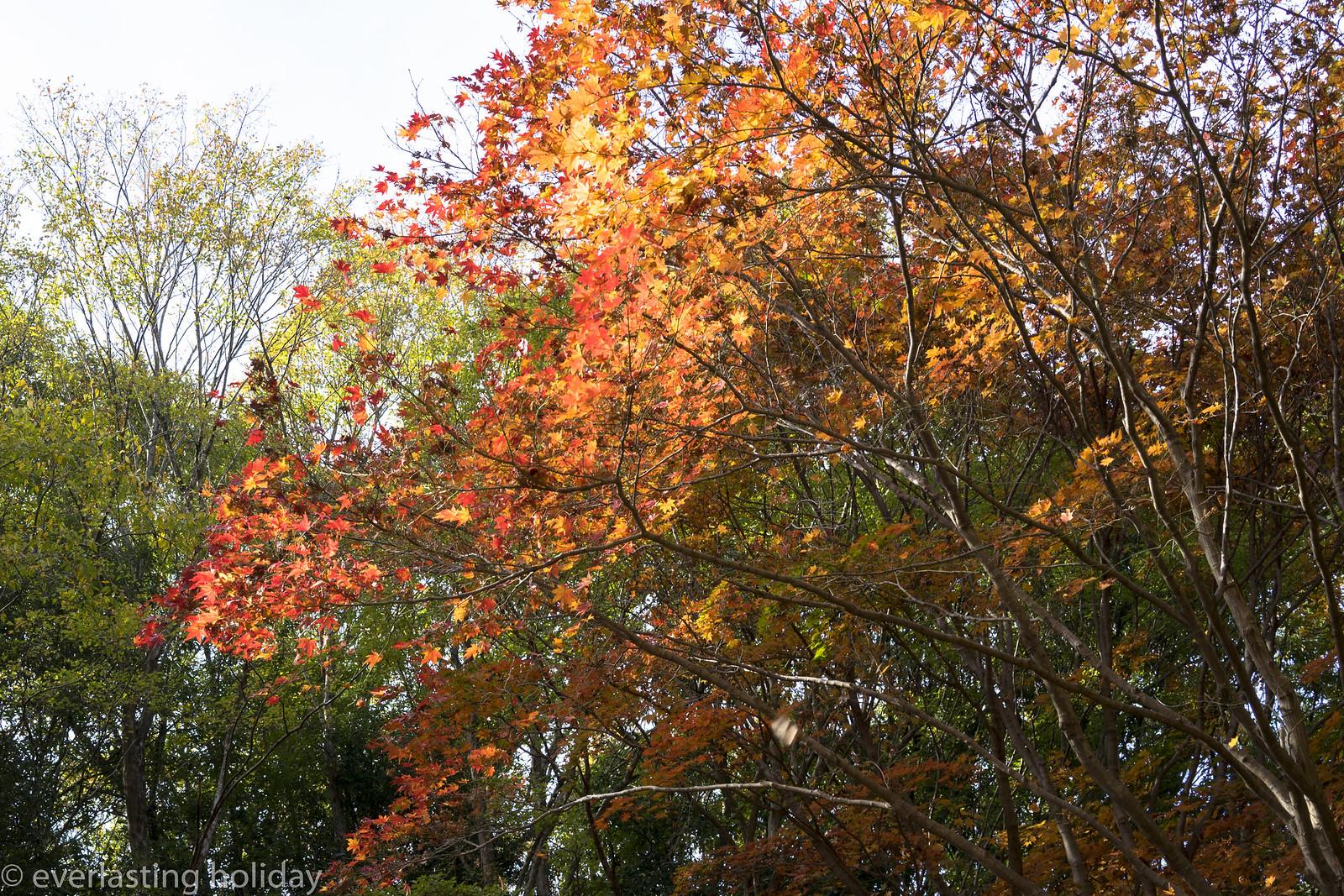 国営武蔵丘陵森林公園 Musashi Kyuryo National Government Park-0004