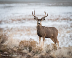 Antelope Island 2015 Dec 21