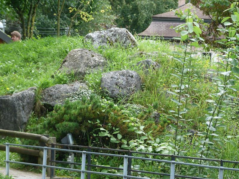 suisse le bouveret swissvapeurparc au jardin forum de jardinage. Black Bedroom Furniture Sets. Home Design Ideas