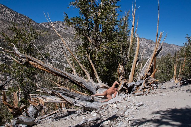 naturist 0010 Ancient Bristlecone Pine Forest, California, USA