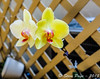 ~ Orchids With A Fuji X T1 2 ~ by iTail ~ 3.3 MV ~ Thanks !!