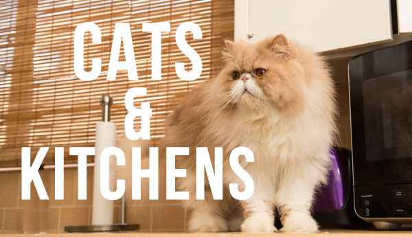cats-and-kitchens