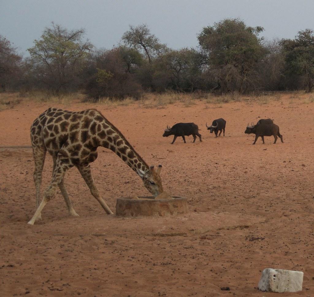 Leobo - Luxury Safari Lodge With Magical Surroundings