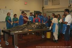2007 workshop