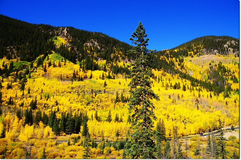 Fall colors at Guanella Pass, Colorado (14)