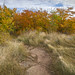Grassy Trail by Brett Whaley