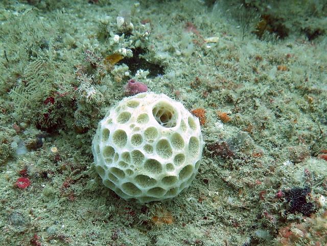 Ball sponge