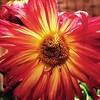 Imperfect. #flower #cameraplus