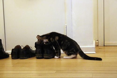 Mittens explores shoes
