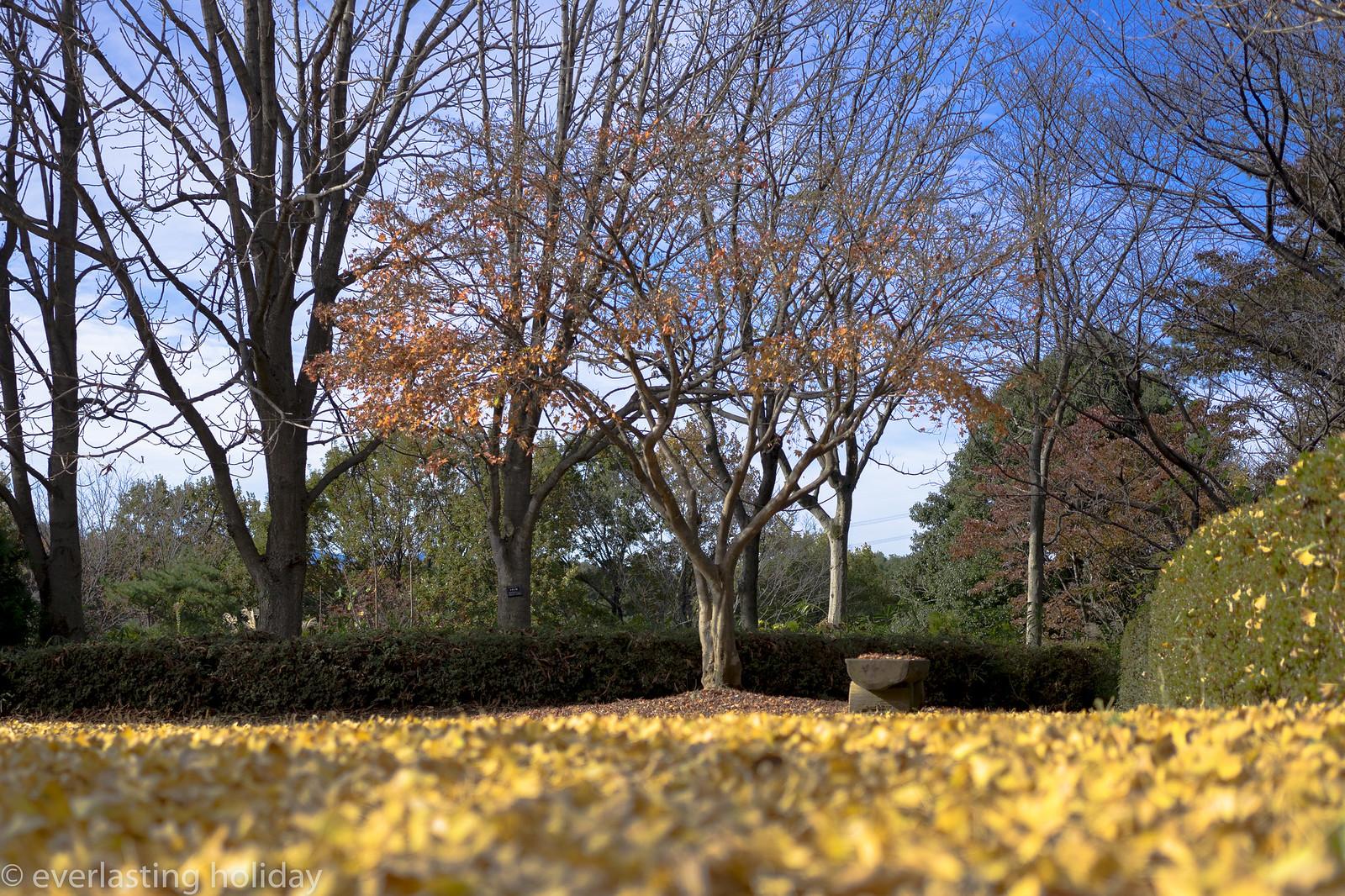 国営武蔵丘陵森林公園 Musashi Kyuryo National Government Park-0003